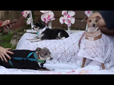 Meine Hunde Wedding | My Dogs  Wedding | Jenna Mourey