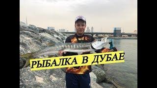 Рыбалка в эмиратах с берега
