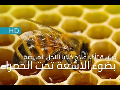 دراسة جديدة تؤكد علاج خلايا النحل المريضة