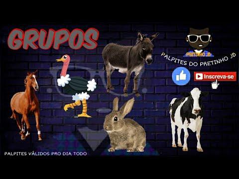 JOGO DO BICHO DE HOJE 01/11/2020 PARA TODAS AS LOTERIAS