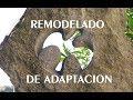 Remodulado de adaptación · Gnosis Cátara · Catarismo XXI · Los cátaros hoy