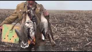Смотреть онлайн Особенности охоты на гусей с подсадными