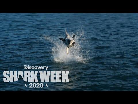 Εντυπωσιακό άλμα 4.5 μέτρων από καρχαρία [video]