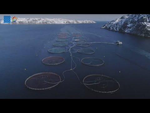 , title : 'Арктическая аквакультура