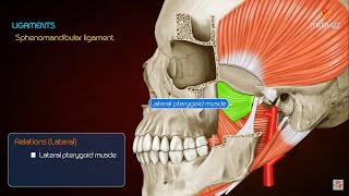 Anatomy of Temporomandibular joint ( TMJ ) Head and Neck - Gross Anatomy medical animations