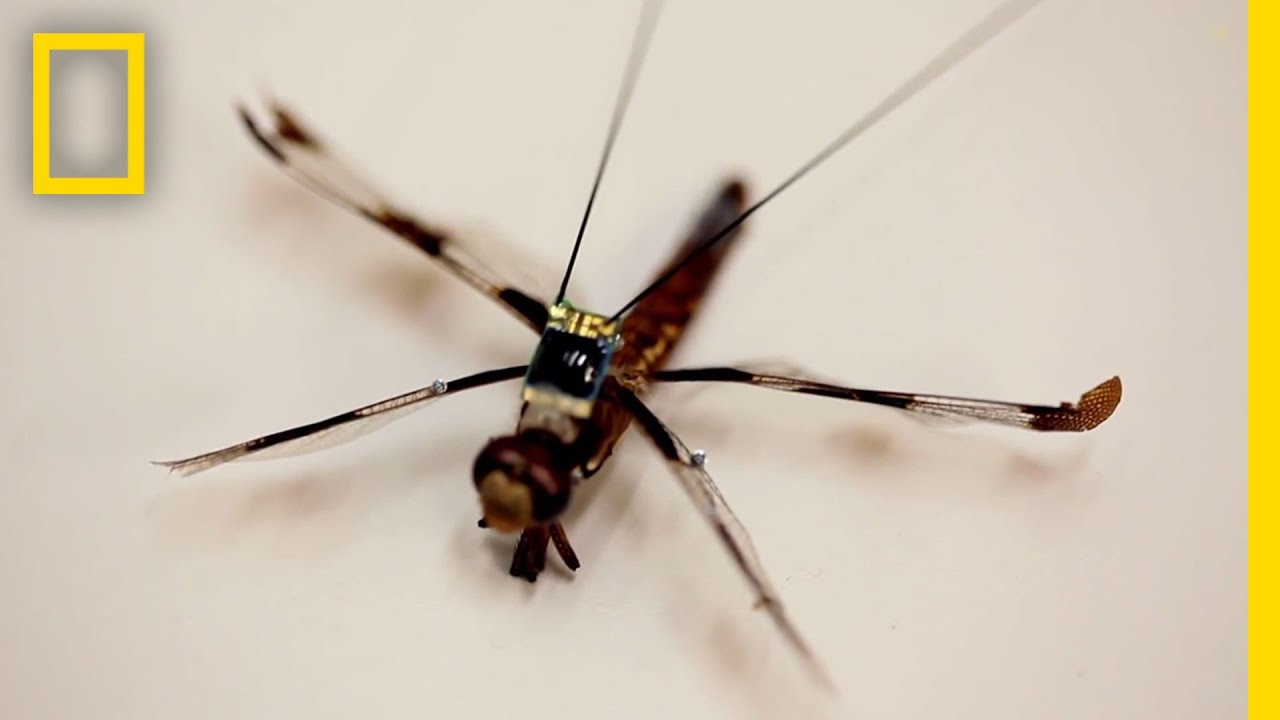 Tiny Backpacks Tap into Dragonflies' Brains | National Geographic thumbnail