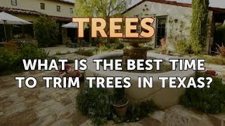 What is the Best Time to Trim Trees in Texas?