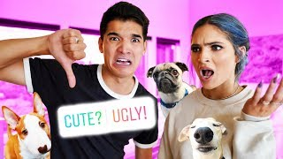 Rating YouTubers' PUPPIES! (1 to 10)