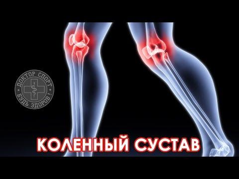 Доктор Спорт «Анатомия коленного сустава»