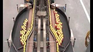 Conveyor Accumulation Buffer