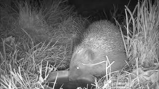 Wildlife Trail Camera - 25.4.2019