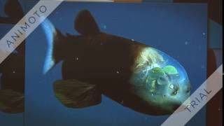 LOOK UP WHATS IN THE DESCRIPTION. THIS IS A BARRELEYE FISH OR A Macropinna Microstoma