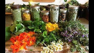 How I Dehydrate And Store Herbs