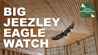 Big Jeezley Eagle Watch Campaign