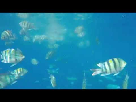 Rotes meer ägypten Juli 2015