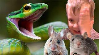 СИМУЛЯТОР маленькой мыши Напала змея создаем семью видео для детей СИМУЛЯТОР маленькой мыши