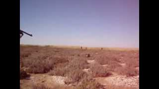 preview picture of video 'Chasse aux sangliers en Tunisie'