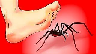 Что делать, если вы увидели паука