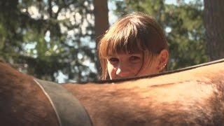 Holzrücken Mit Pferden   Handwerk Mit Tradition