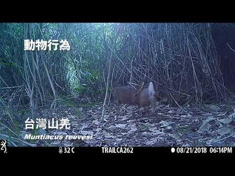 107年花蓮林管處大農大富平森園區自動相機影片濃縮版