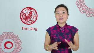 Dog 2017 Chinese Horoscope Predictions Samye Populyarnye Video