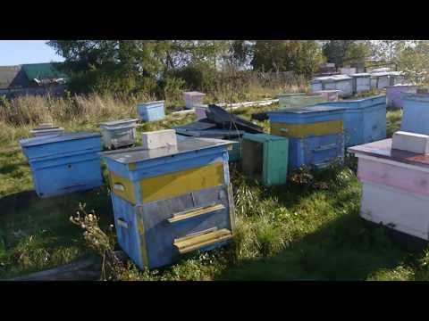 Осень на пасеке. Обзор инвентаря с купленной пасеки. Окончание пчеловодного сезона