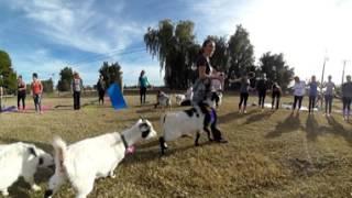 Super Cool Goat Yoga 365 Video