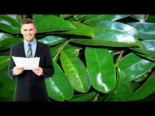 Propiedades-curativas-de-las-hojas