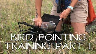 Pointing Birds: Upland Bird Dog Training - Part 1