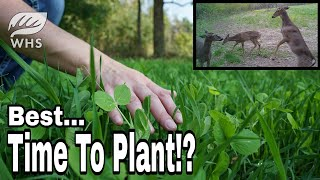 Best Time To Plant A Food Plot