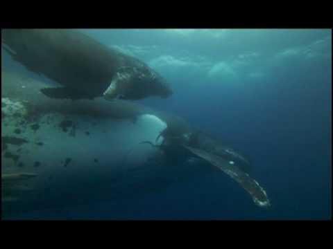 Documentaire 3D - Dauphins et Baleines 3D - Bande Annonce VF