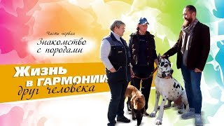 Кинолог Вероника Калашникова о породах собак и правилах содержания