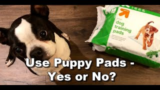 Should You Train Your Boston Terrier To Use Puppy Pads