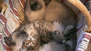Способ Как сделать жизнь наполненной и счастливой Без кота жизнь не та help the kittens