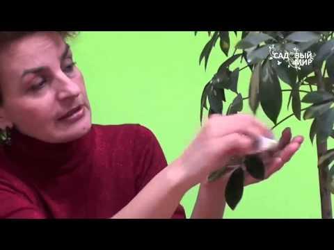 """Как помочь комнатным цветам зимой.  Сайт """"Садовый мир"""""""