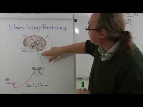 Gequetschten Nerven der Halswirbelsäule