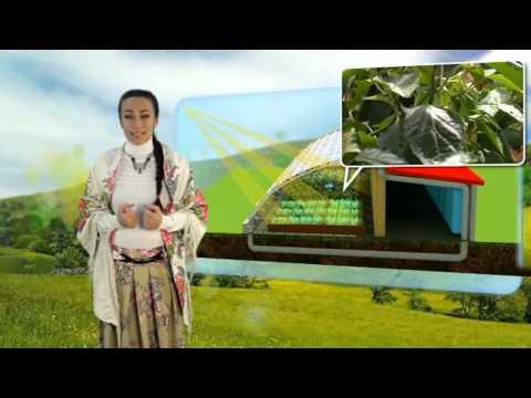 Что такое: Солнечный Био-Вегетарий? Ладушка расскажет! Наш сайт http://sbv24.ru/