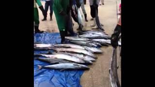 preview picture of video 'يوم ثاني العيد سوق السمك المركزي بالقطيف'