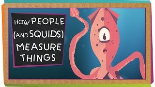 How People (And Squids) Measure Things