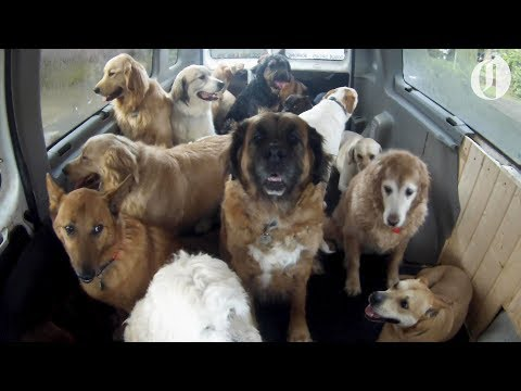 Doggo School Bus by @The Oregonian