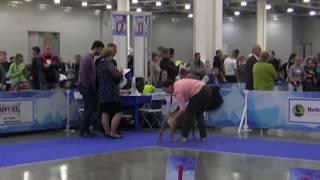 RUSSIA 1 2017 CDB female Intermediate