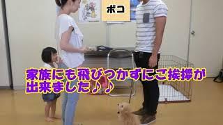 動画サムネイル:平成27年 9月の子犬コースに参加してくれた、ワンちゃんたちをご紹介!!