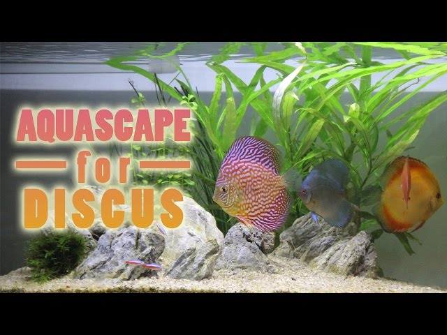 Simple Aquascape setup for Discus & Angelfish Indonesia