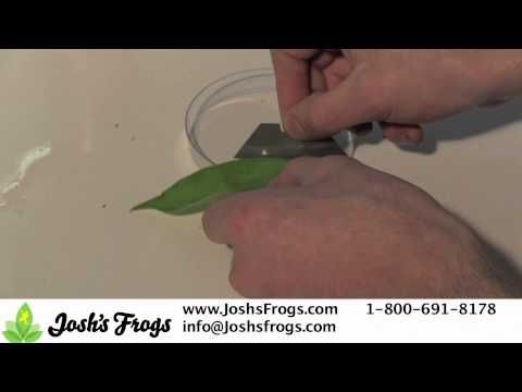 Dart Frog Egg Care
