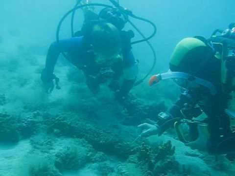 Insel Cres, Diving Center Cres, Tauchen mit Meeresbiologin, Insel Cres,Kroatien
