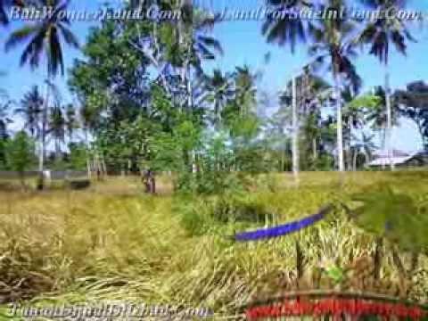 Kesempatan berinvestasi 500 m2 Lahan  View kebun di Sentral Ubud TJUB433