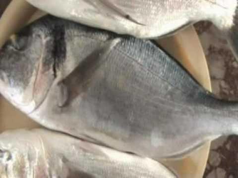 Ψάρεμα μπολονέζ και απίκο στα Μουδιανιά