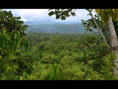 Is the Amazon such a big co2 sink?