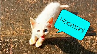 This Cute Little Blue And Green Eyed Kitten Chose Me As Her Mommy Update| Most Expensive Cat| Mar Fy