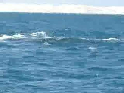 Blue penis whales of size a